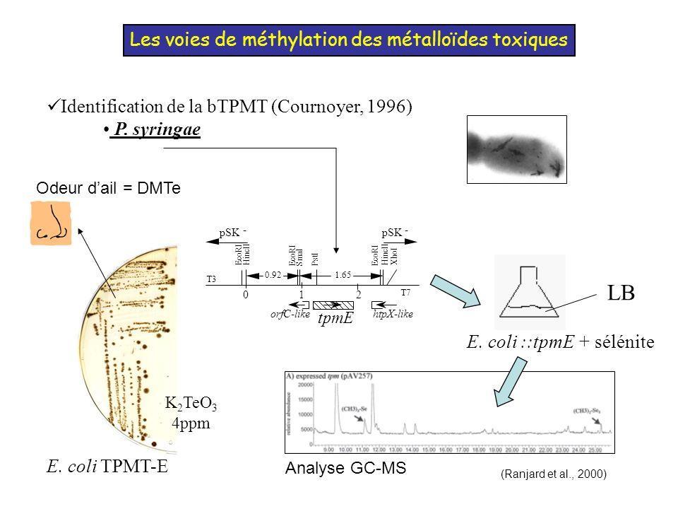 Méthylation bactérienne de lAs (en aérobiose) Etat des lieux: - E.
