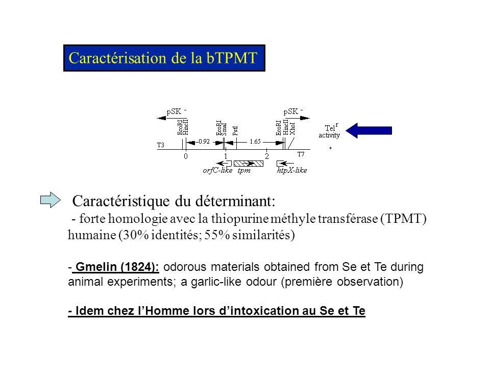 Krynetski & Evans, Oncogene, 2003 Métabolisme des thiopurines - Fin des années 80, la TPMT est montrée essentielle pour le métabolisme des pro-drogues « 6-mercaptopurine » et « thioguanine nucleotides » HPTR: hypoxanthine phosphoribosyltransferase Autres fonctions chez lHomme - détoxication de métalloïdes???