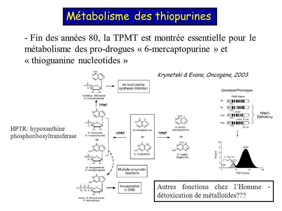 Conclusions: 1.Plusieurs observations laissent entrevoir un rôle de la TPMT dans la méthylation de lAs 2.Les formes méthylées de lAs sont obtenues dans les conditions dexpression de la TPMT ou chez des organismes TPMT+ 3.