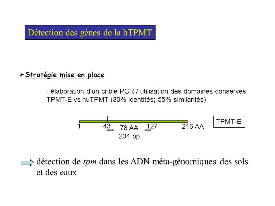 Diversité des bTPMT Homme, Rat, Souris UbiG UNK TPMT A B C D E F G H I J K L M N P O Q R S T U V X ( et -proteobacteria) (eubacteria) bTPMT uniquement chez 30% des -proteobacteria =, Bordetella spp.