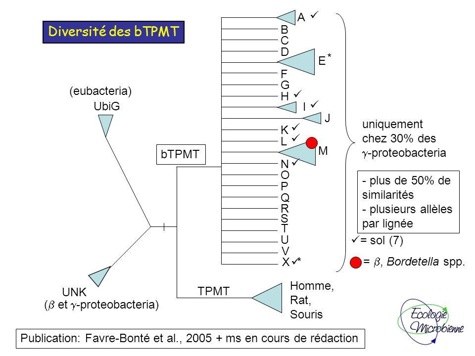 14.4 25 35 45 66.2 116 18.4 kDa Avant induction Après induction Extrait soluble TPMT G1 TPMT G2 Marqueurs TPMT G3 Chromatographie d affinité : TPMT-G : Ni-NTA (élution par 250 mM imidazole) TPMT-E : Glutathione-Sepharose-4B (élution par 10 mM glutathion) TPMT-G TPMT-E Avant AprèsTPMT-E GST M Coupure de lHis tag Affinité des bTPMT pour les métalloïdes