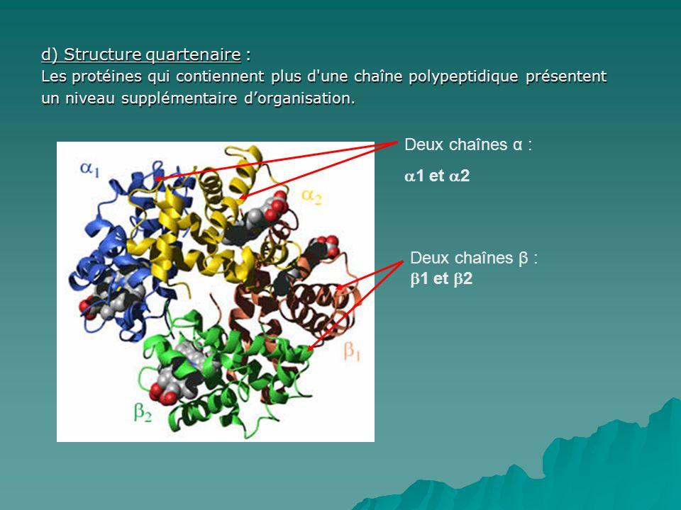 d) Structure quartenaire : Les protéines qui contiennent plus d'une chaîne polypeptidique présentent un niveau supplémentaire dorganisation. Deux chaî
