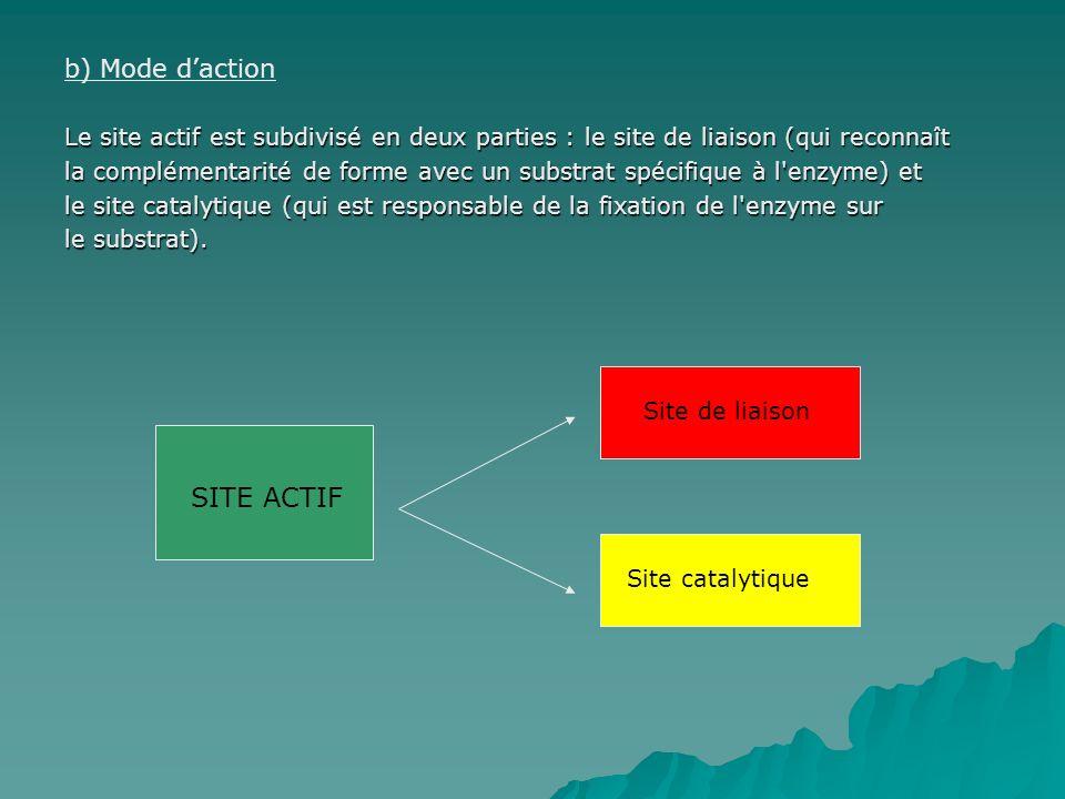 b) Mode daction Le site actif est subdivisé en deux parties : le site de liaison (qui reconnaît la complémentarité de forme avec un substrat spécifique à l enzyme) et le site catalytique (qui est responsable de la fixation de l enzyme sur le substrat).