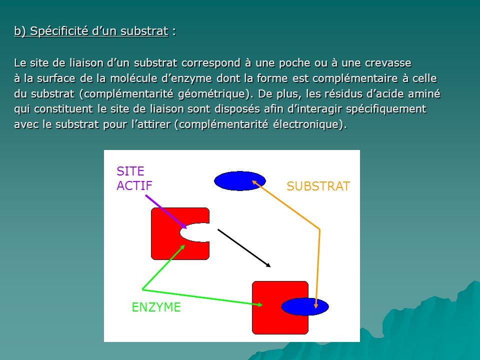 b) Spécificité dun substrat : Le site de liaison dun substrat correspond à une poche ou à une crevasse à la surface de la molécule denzyme dont la forme est complémentaire à celle du substrat (complémentarité géométrique).