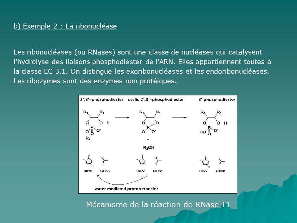 b) Exemple 2 : La ribonucléase Les ribonucléases (ou RNases) sont une classe de nucléases qui catalysent l hydrolyse des liaisons phosphodiester de l ARN.