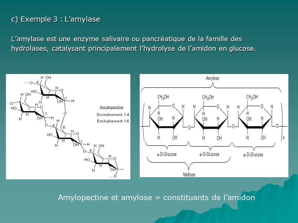 c) Exemple 3 : Lamylase Lamylase est une enzyme salivaire ou pancréatique de la famille des hydrolases, catalysant principalement lhydrolyse de lamidon en glucose.