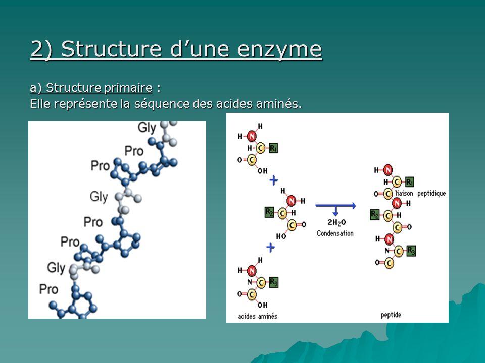 2) Structure dune enzyme a) Structure primaire : Elle représente la séquence des acides aminés.