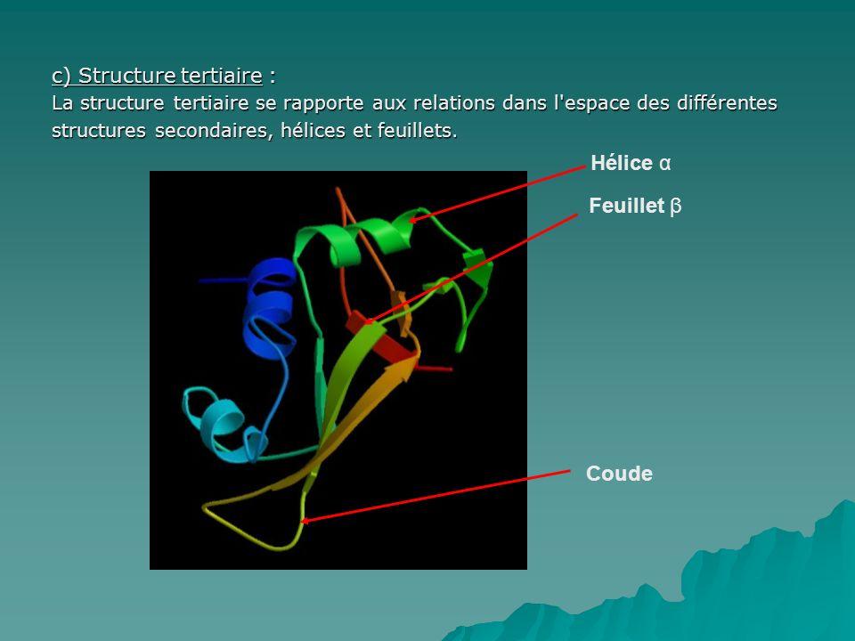 c) Structure tertiaire : La structure tertiaire se rapporte aux relations dans l'espace des différentes structures secondaires, hélices et feuillets.