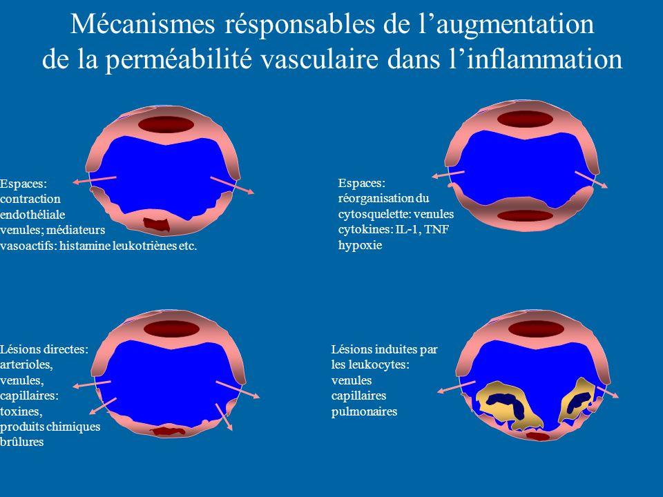 Mécanismes résponsables de laugmentation de la perméabilité vasculaire dans linflammation Espaces: contraction endothéliale venules; médiateurs vasoac