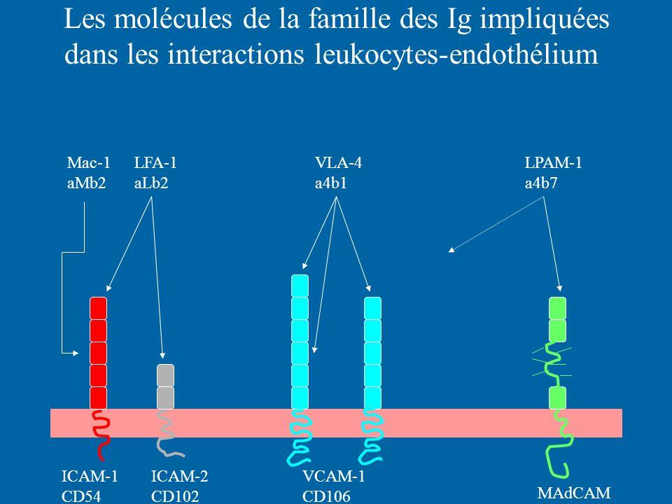 Les molécules de la famille des Ig impliquées dans les interactions leukocytes-endothélium ICAM-1 CD54 ICAM-2 CD102 VCAM-1 CD106 MAdCAM Mac-1LFA-1 VLA