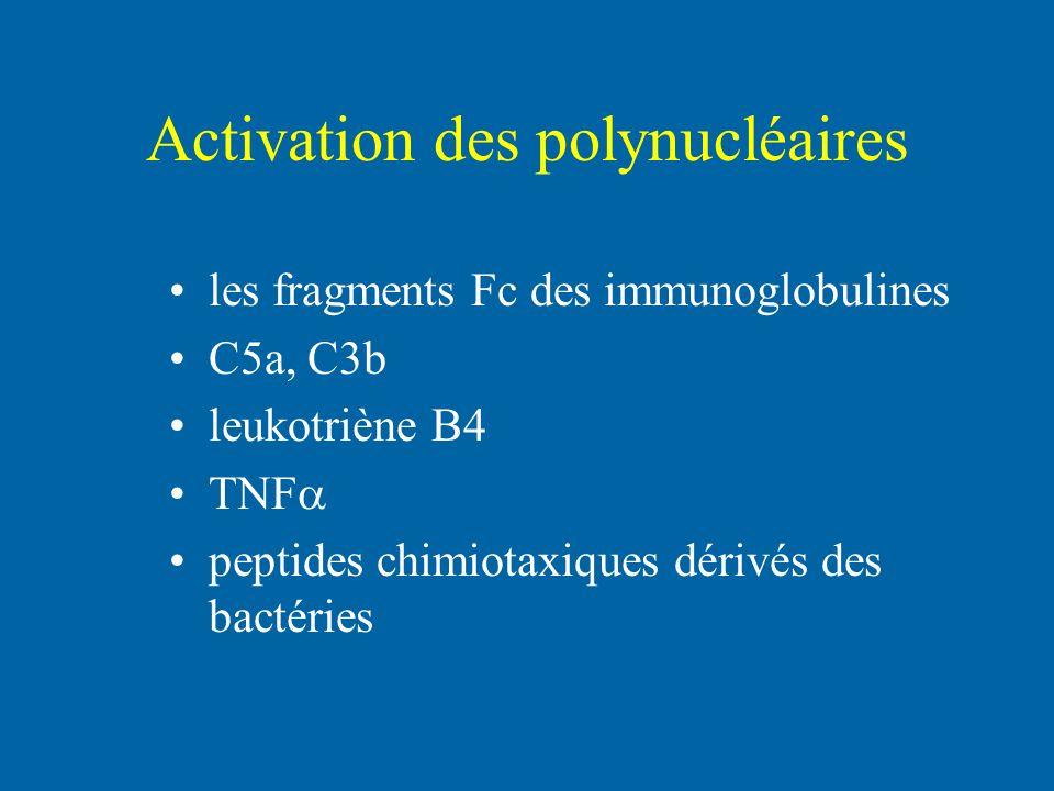 Activation des polynucléaires les fragments Fc des immunoglobulines C5a, C3b leukotriène B4 TNF peptides chimiotaxiques dérivés des bactéries