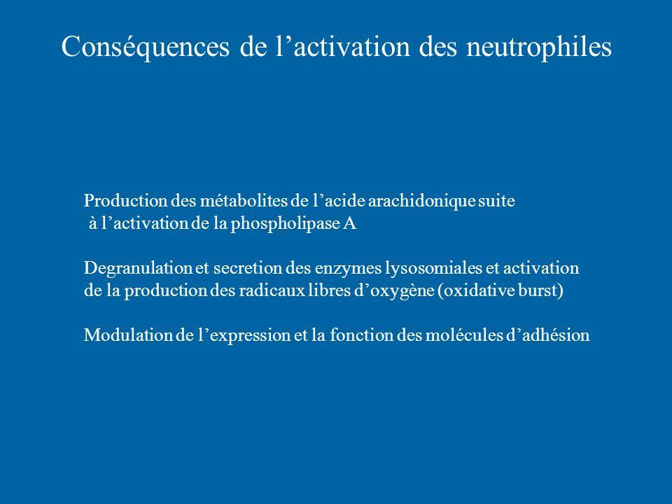 Conséquences de lactivation des neutrophiles Production des métabolites de lacide arachidonique suite à lactivation de la phospholipase A Degranulatio