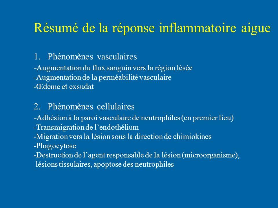 Résumé de la réponse inflammatoire aigue 1.Phénomènes vasculaires - Augmentation du flux sanguin vers la région lésée -Augmentation de la perméabilité