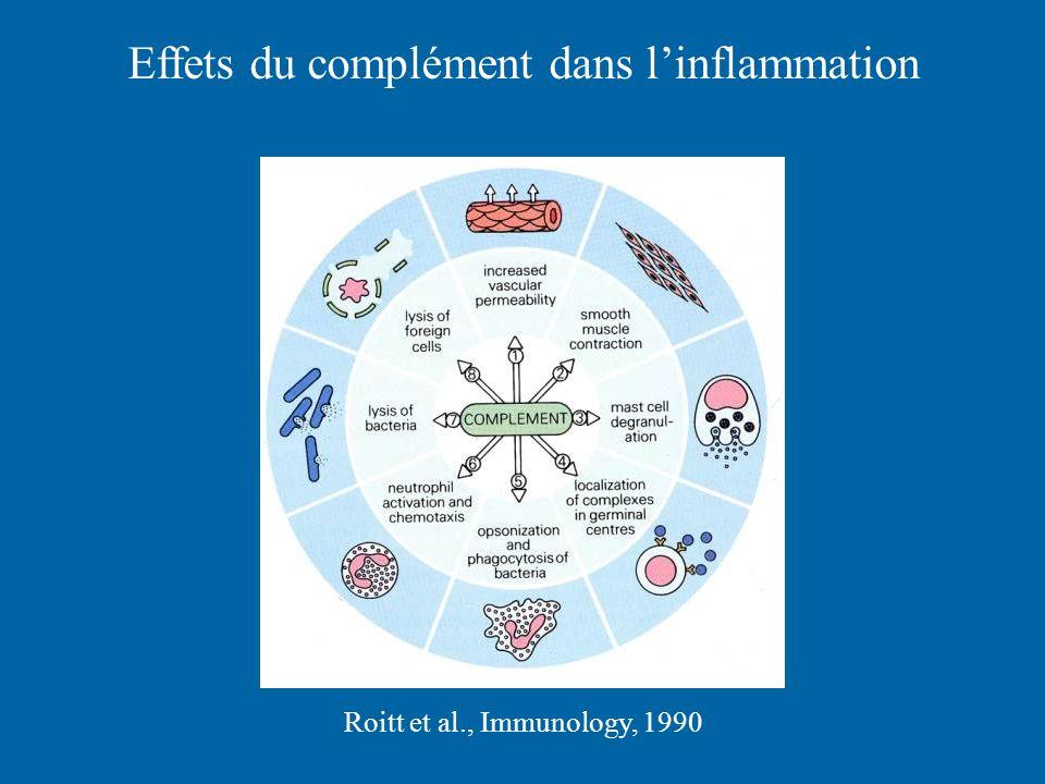 Effets du complément dans linflammation Roitt et al., Immunology, 1990