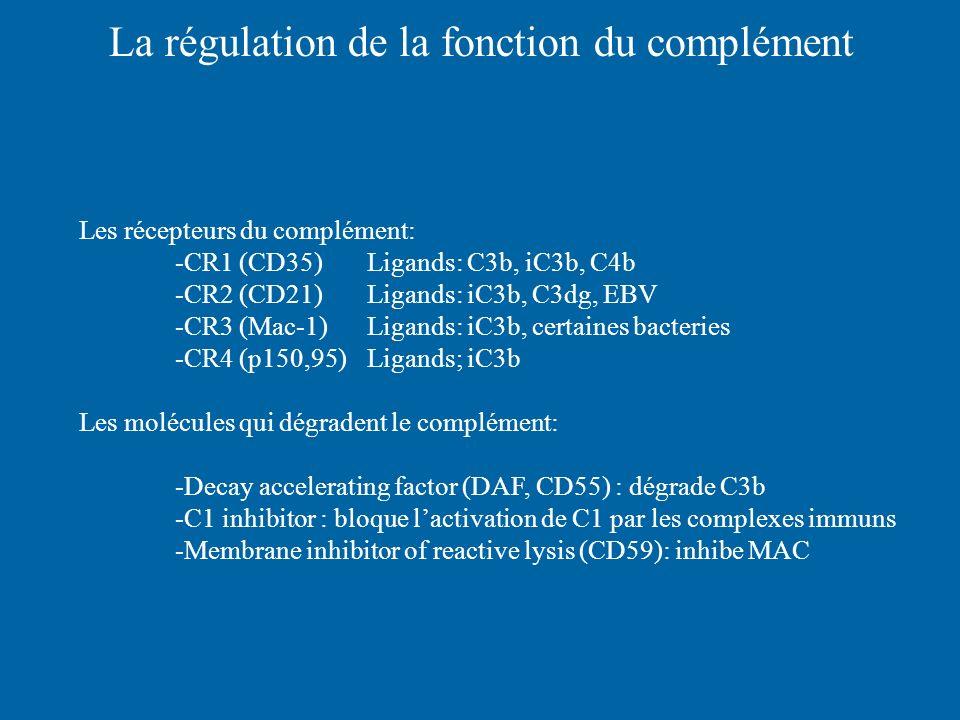 La régulation de la fonction du complément Les récepteurs du complément: -CR1 (CD35) Ligands: C3b, iC3b, C4b -CR2 (CD21)Ligands: iC3b, C3dg, EBV -CR3
