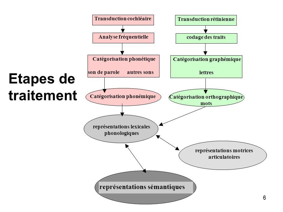 6 Catégorisation phonémique Transduction cochléaire Analyse fréquentielle Catégorisation phonétique son de parole autres sons représentations lexicale