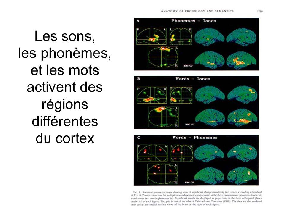 9 Les sons, les phonèmes, et les mots activent des régions différentes du cortex