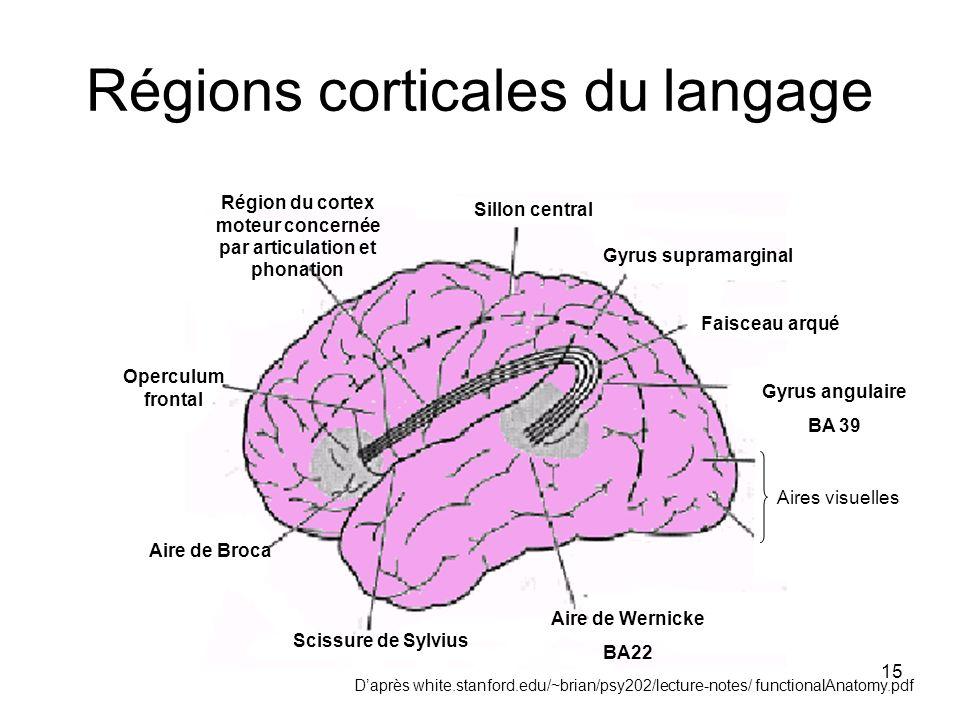 15 Régions corticales du langage Sillon central Scissure de Sylvius Aire de Wernicke BA22 Gyrus angulaire BA 39 Aire de Broca Operculum frontal Région