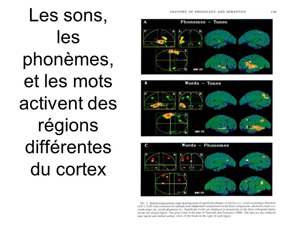 16 Les sons, les phonèmes, et les mots activent des régions différentes du cortex