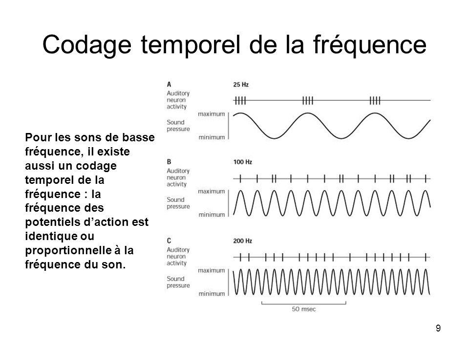 9 Codage temporel de la fréquence Pour les sons de basse fréquence, il existe aussi un codage temporel de la fréquence : la fréquence des potentiels d