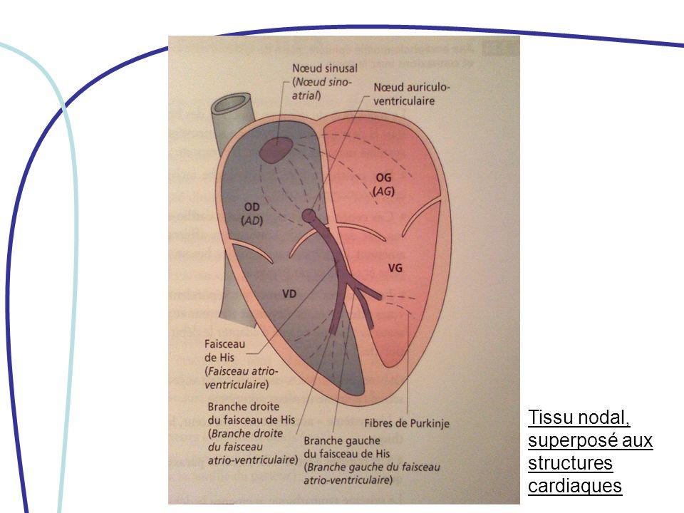 III/ PROPRIETES -effet vasculaire -effet cardiaque -effet protecteur (protection du myocarde, protection rénale, effet métabolique)