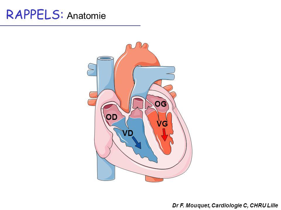 RAPPELS: Anatomie OG VG VD OD