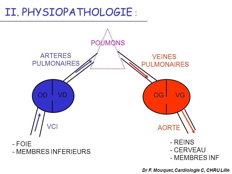 OD VD POUMONS ARTERES PULMONAIRES VEINES PULMONAIRES OGVG VCI - FOIE - MEMBRES INFERIEURS AORTE - REINS - CERVEAU - MEMBRES INF Dr F. Mouquet, Cardiol