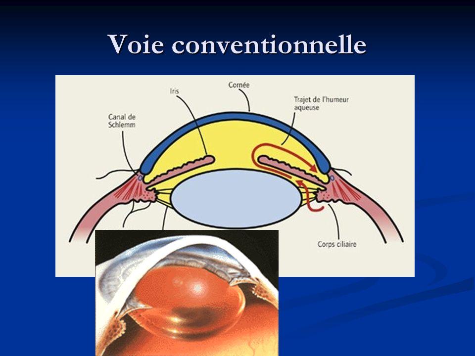 Anatomie du nerf optique