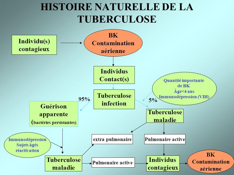 HISTOIRE NATURELLE DE LA TUBERCULOSE Individu(s) contagieux BK Contamination aérienne Individus Contact(s) Tuberculose infection Guérison apparente (