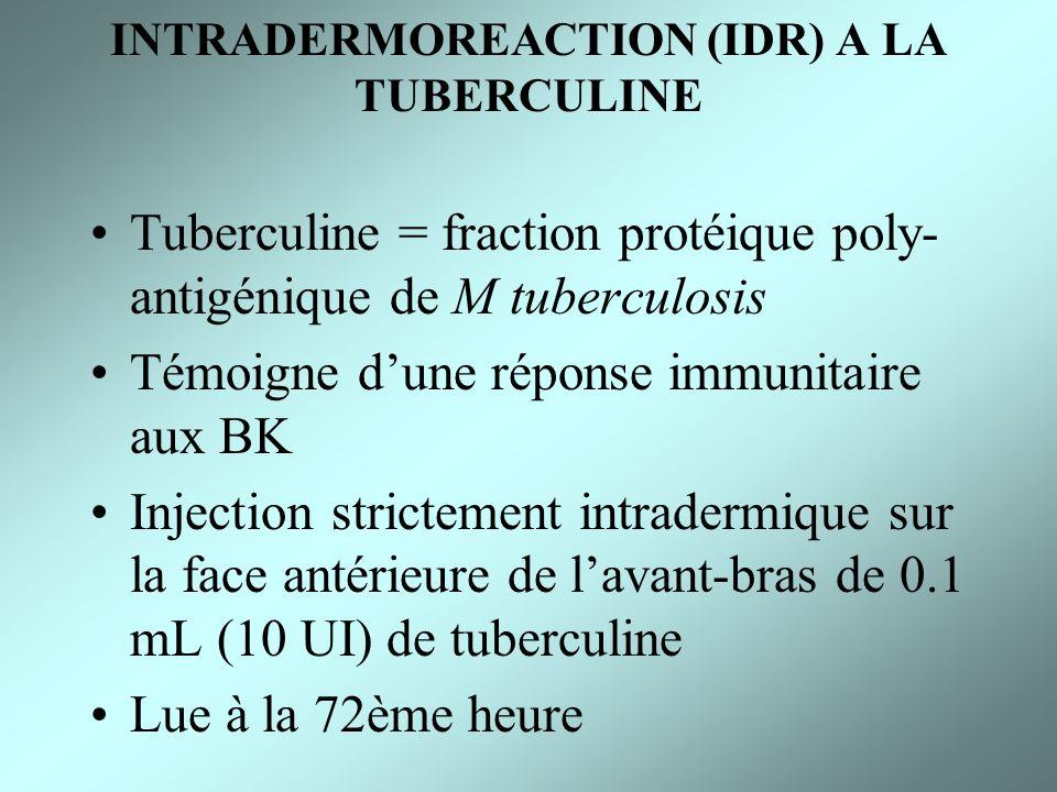 INTRADERMOREACTION (IDR) A LA TUBERCULINE Tuberculine = fraction protéique poly- antigénique de M tuberculosis Témoigne dune réponse immunitaire aux B