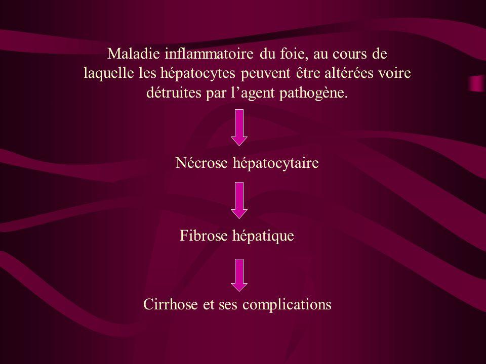 Maladie inflammatoire du foie, au cours de laquelle les hépatocytes peuvent être altérées voire détruites par lagent pathogène. Nécrose hépatocytaire