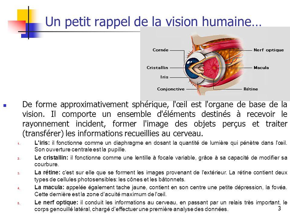 3 Un petit rappel de la vision humaine… De forme approximativement sphérique, l'œil est l'organe de base de la vision. Il comporte un ensemble d'éléme