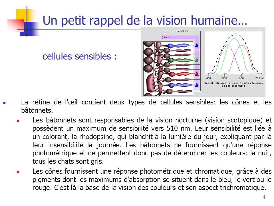 4 Un petit rappel de la vision humaine… La rétine de l œil contient deux types de cellules sensibles: les cônes et les bâtonnets.