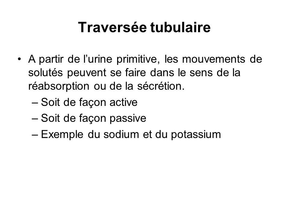 Traversée tubulaire A partir de lurine primitive, les mouvements de solutés peuvent se faire dans le sens de la réabsorption ou de la sécrétion. –Soit