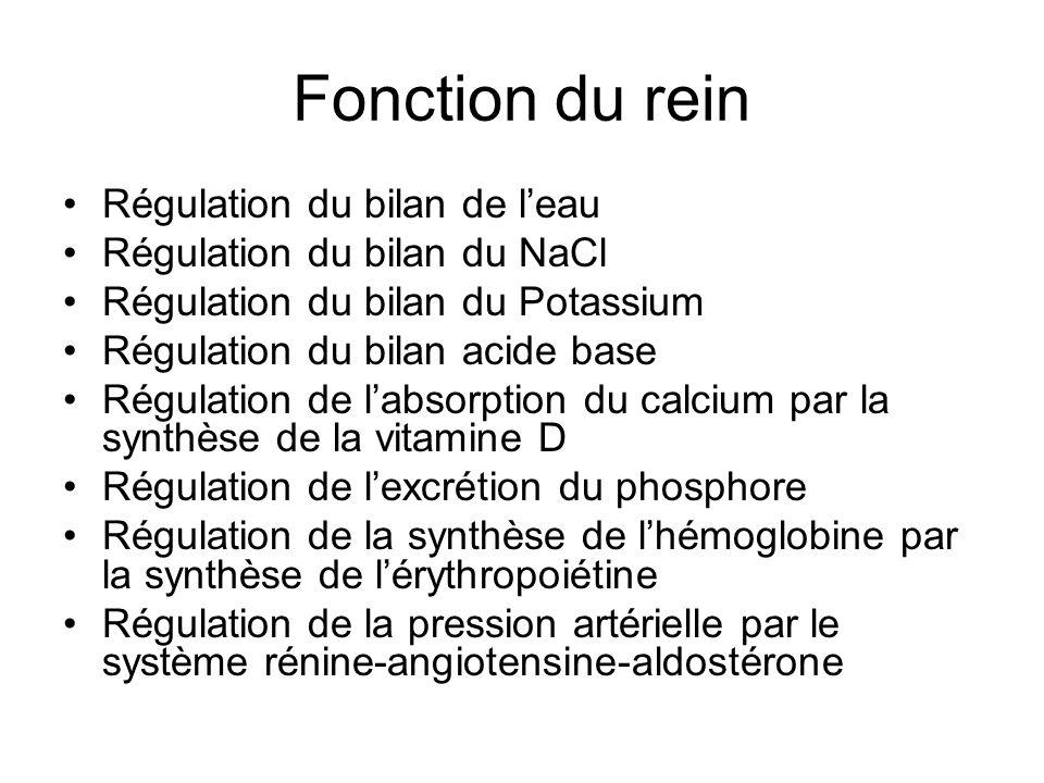 Fonction du rein Régulation du bilan de leau Régulation du bilan du NaCl Régulation du bilan du Potassium Régulation du bilan acide base Régulation de