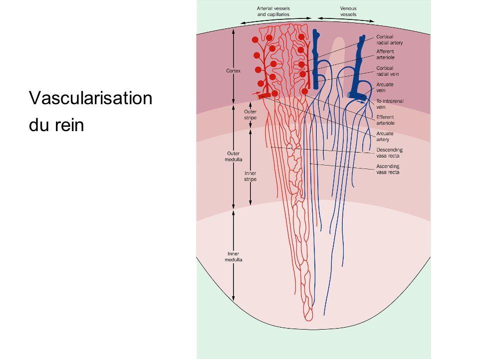 Hématurie Hématurie macroscopique Sang visible à lœil nu dans lurine Rechercher la présence de caillots qui signent latteinte de larbre urinaire Hématurie microscopique Non visible à lœil nu Détectable par la bandelette urinaire Confirmation par lECBU et létude du sédiment urinaire Plus de 10 hématies par mm3, soit plus de 10 4 /ml
