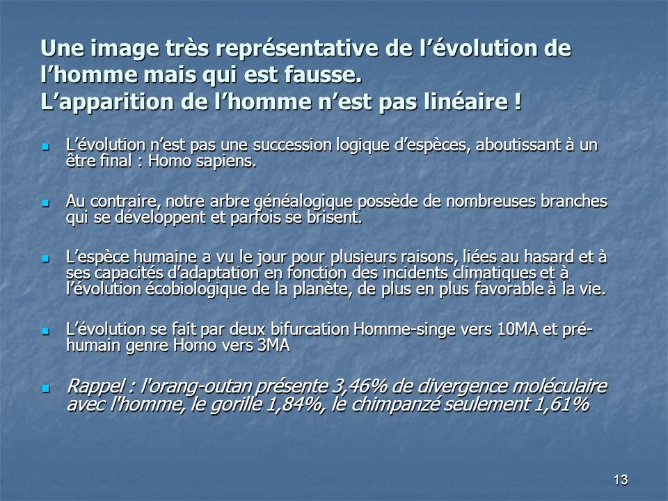 13 Une image très représentative de lévolution de lhomme mais qui est fausse. Lapparition de lhomme nest pas linéaire ! Lévolution nest pas une succes