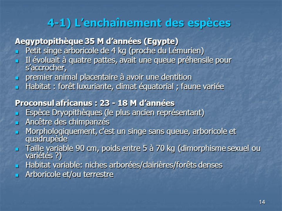 14 4-1) Lenchaînement des espèces Aegyptopithèque 35 M dannées (Egypte) Petit singe arboricole de 4 kg (proche du Lémurien) Petit singe arboricole de