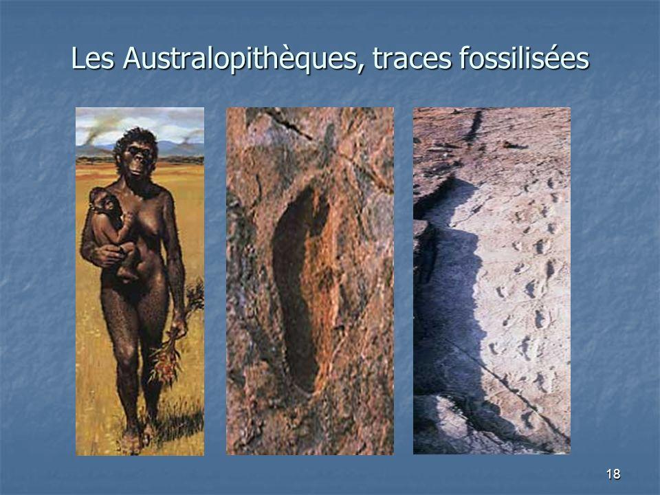 18 Les Australopithèques, traces fossilisées