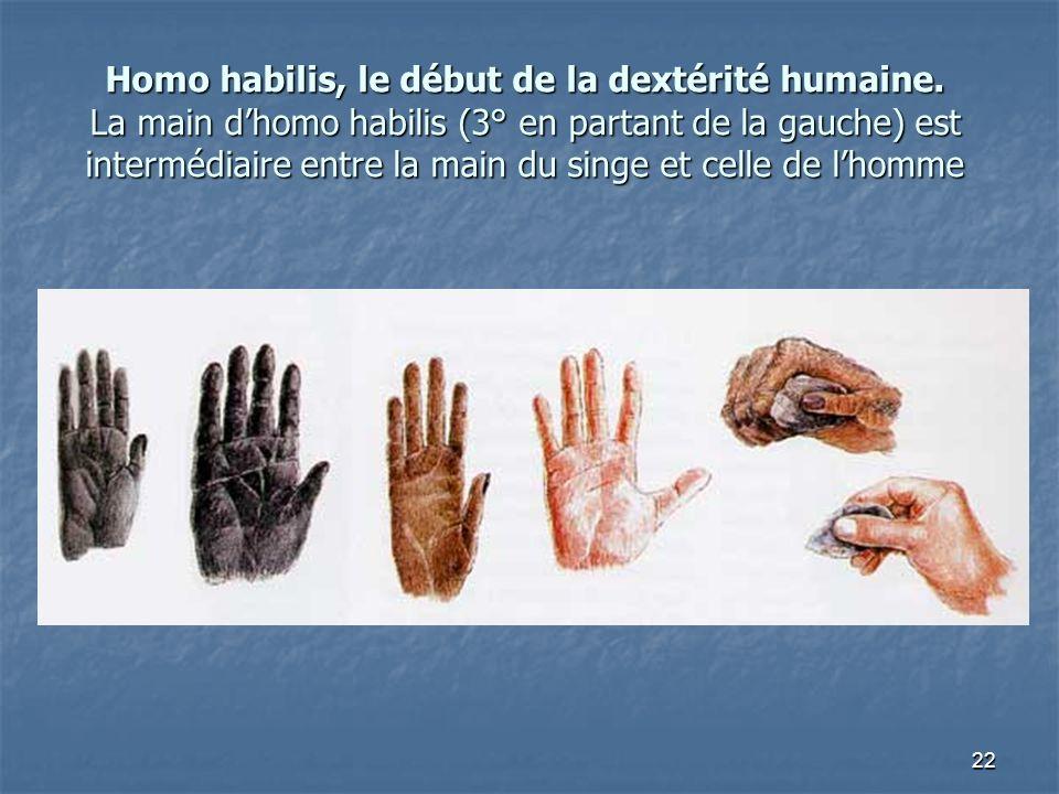 22 Homo habilis, le début de la dextérité humaine. La main dhomo habilis (3° en partant de la gauche) est intermédiaire entre la main du singe et cell