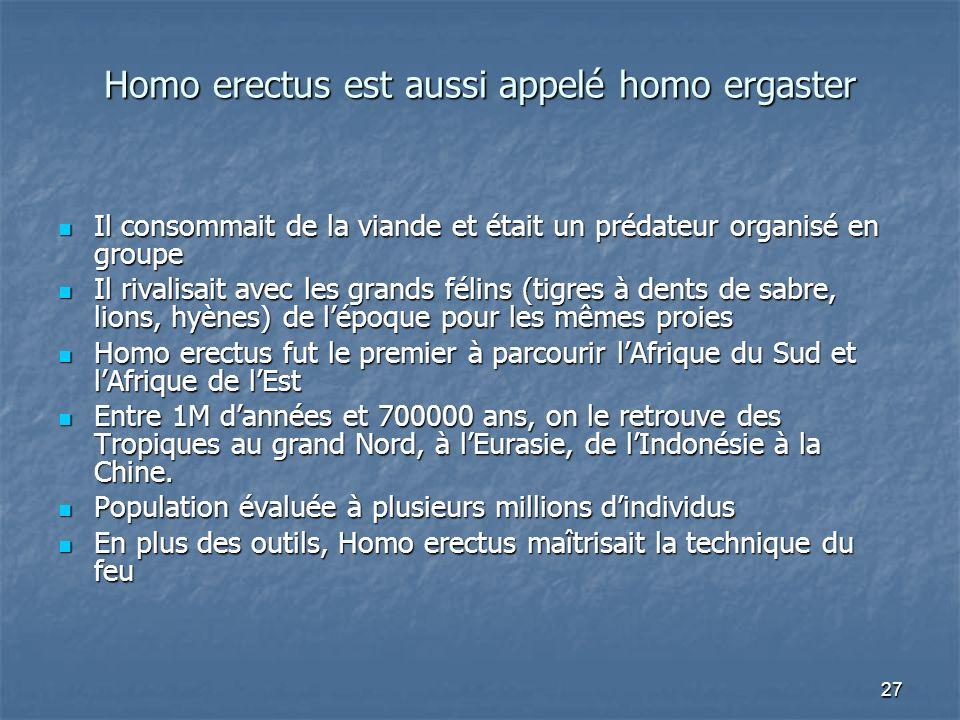 27 Homo erectus est aussi appelé homo ergaster Il consommait de la viande et était un prédateur organisé en groupe Il consommait de la viande et était