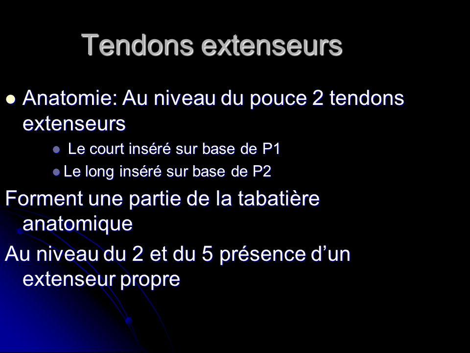 Tendons extenseurs Anatomie: Au niveau du pouce 2 tendons extenseurs Anatomie: Au niveau du pouce 2 tendons extenseurs Le court inséré sur base de P1
