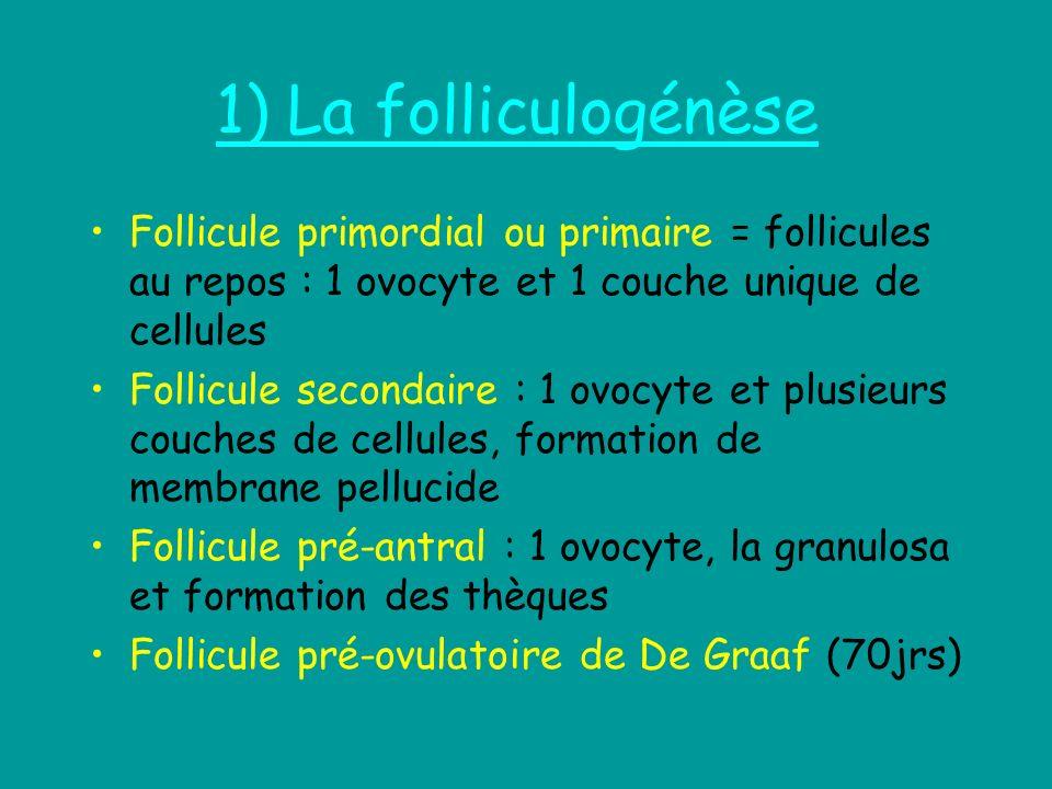 1) La folliculogénèse Follicule primordial ou primaire = follicules au repos : 1 ovocyte et 1 couche unique de cellules Follicule secondaire : 1 ovocy
