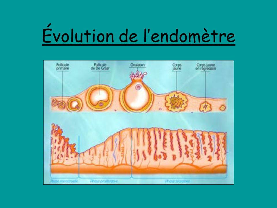 Évolution de lendomètre