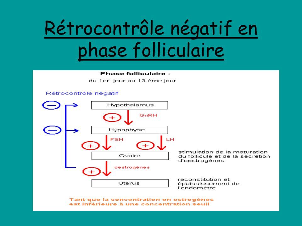 Rétrocontrôle négatif en phase folliculaire