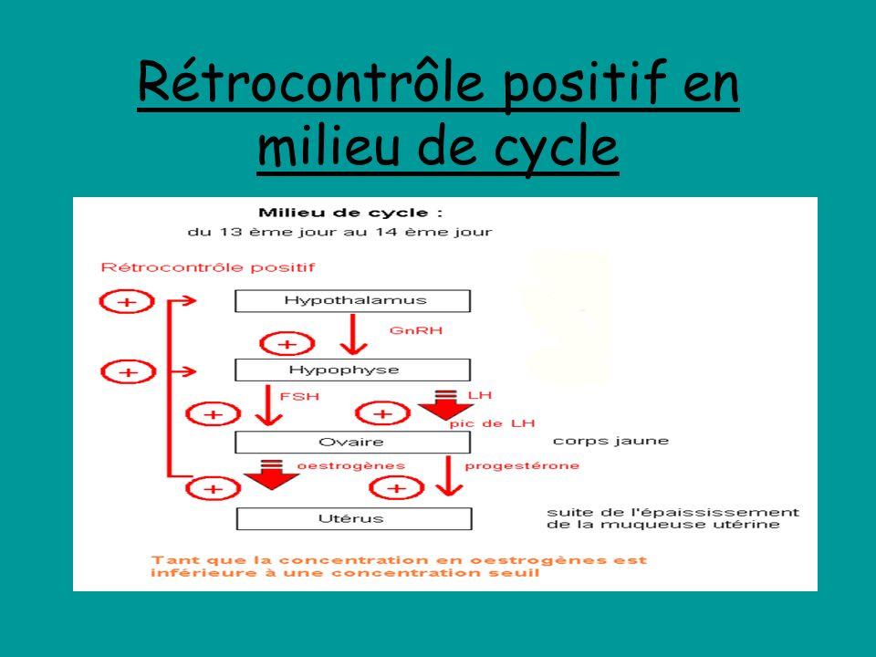 Rétrocontrôle positif en milieu de cycle