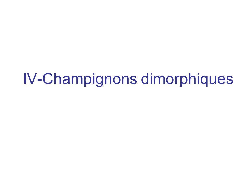 IV-Champignons dimorphiques