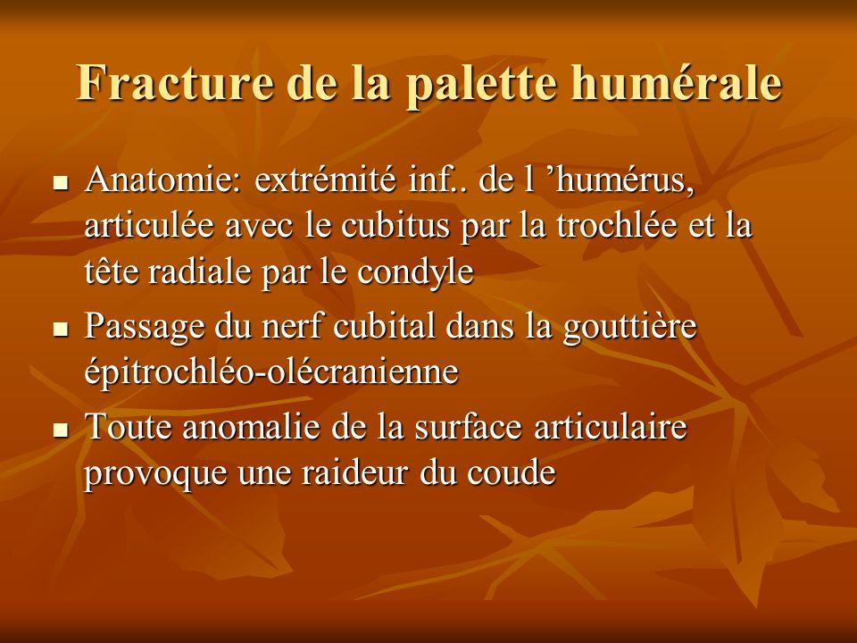 Anatomie: extrémité inf.. de l humérus, articulée avec le cubitus par la trochlée et la tête radiale par le condyle Anatomie: extrémité inf.. de l hum