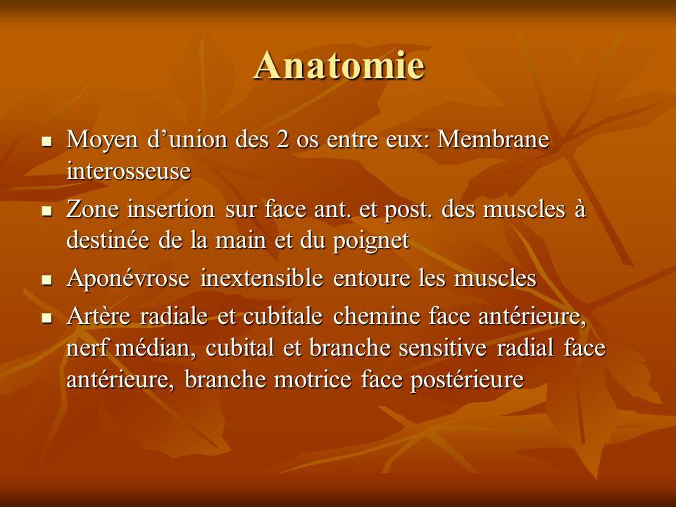 Anatomie Moyen dunion des 2 os entre eux: Membrane interosseuse Moyen dunion des 2 os entre eux: Membrane interosseuse Zone insertion sur face ant. et