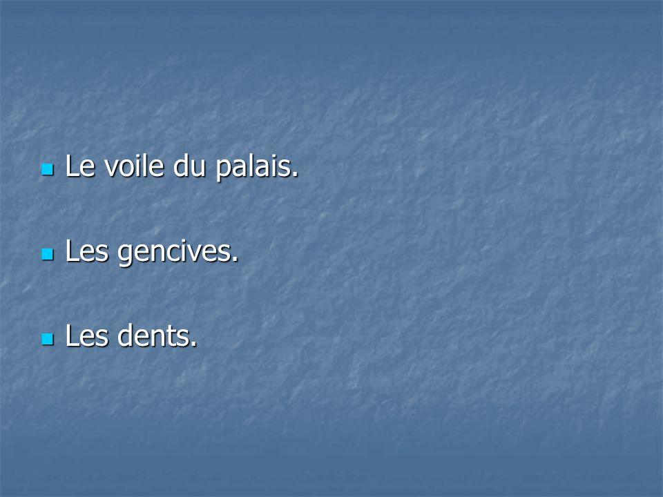 Le voile du palais. Le voile du palais. Les gencives. Les gencives. Les dents. Les dents.